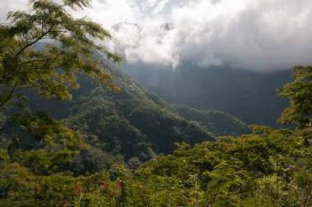Forest surrounding Wae Rebo village.