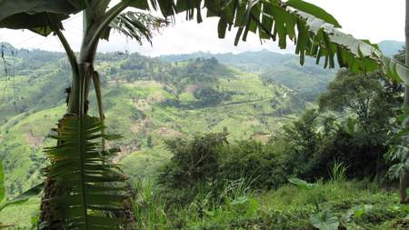 forestry landscape in Cameroon