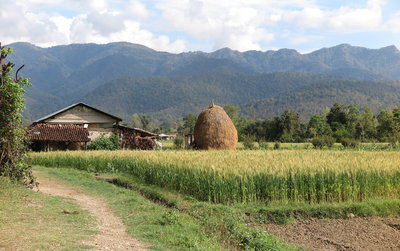 Forests for socioeconomic development and food security