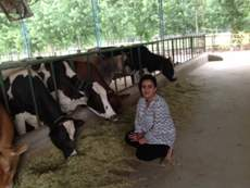 At our dairy unit