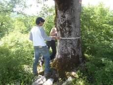 Measuring veteran trees in sacred groves