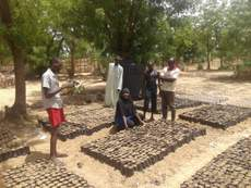 At the nursery raising seedlings
