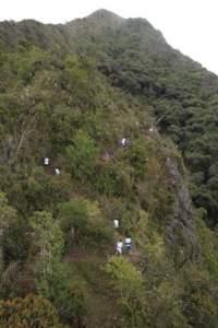 Chasquis corriendo entre bosques andinos