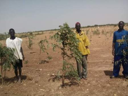 Farmers in Dutsin-Ma and their saplings