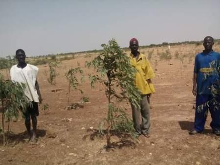 Farmers in Dutsin-Ma and their saplings