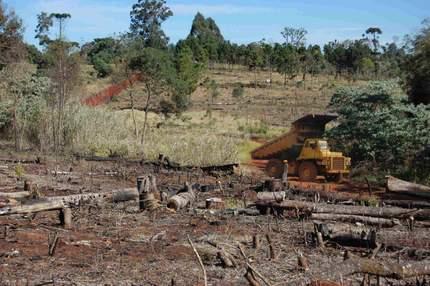 Desmonte de bosques en la provincia de Misiones, en el norte de Argentina