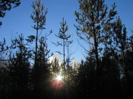 Untapped potential of the biomass in South-east Europe