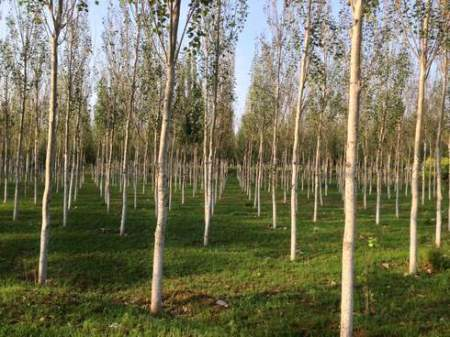 Forest or accumulation of trees? Afforestation meant as the establishment of trees, not the re-establishment of a forest ecosystem
