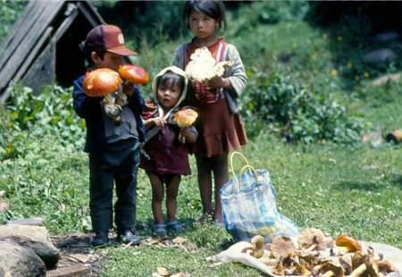 El aprovechamiento de los hongos y otros microorganismos es una práctica ancestral global que se aprende en los primeros años de vida como una forma de supervivencia y para preservar nuestra cultura ancestral planetaria