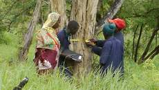 Participatory evaluation of timber resources in Kisangi village land forest reserve
