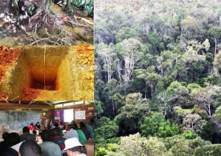 Integrating local communities in rainforest carbon quantification