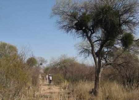 Bosque semiárido del Parque Chaqueño, Argentina
