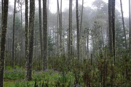 Bosque en la Sierra Juárez de Oaxaca.