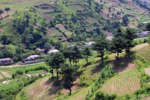 Restored and restoring hillsides in north Hwuanghae province