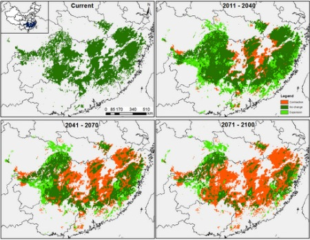 An example projection from our climate and ecological models showing that the climate niche of Chinese fir is disappearing with climate change